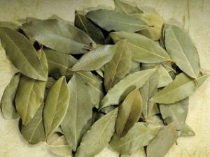 Conservazione delle foglie di alloro